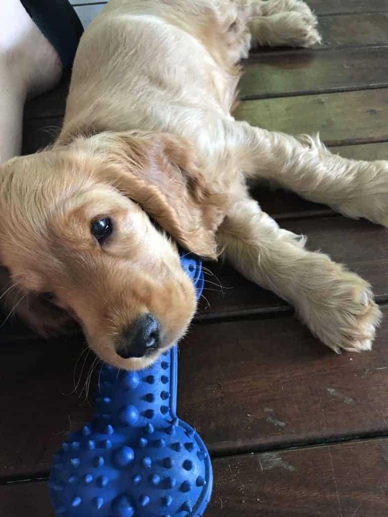 Puppy Services: Puppy Visits