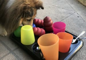 dog eating treats from a muffin tray covered in kongs, cups and spoons